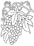 coloriage enfant Vendanges