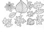 coloriage Feuilles