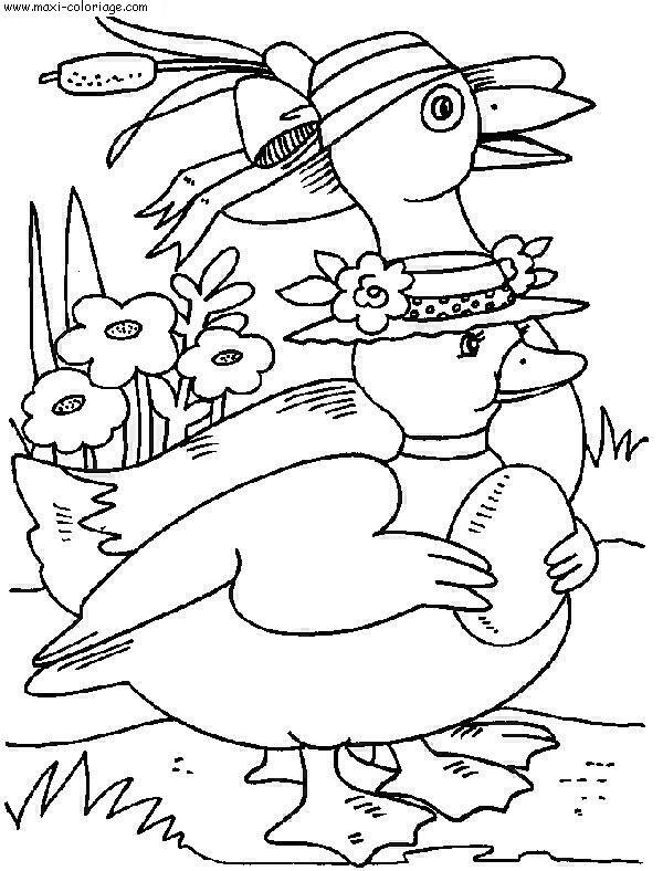 Coloriage canards dessin canards canards coloriage n 4025 - Maxi coloriage ...