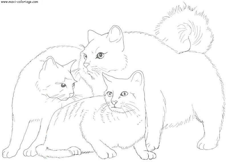 3 petit chat coloriage - Dessin a colorier bebe chat ...