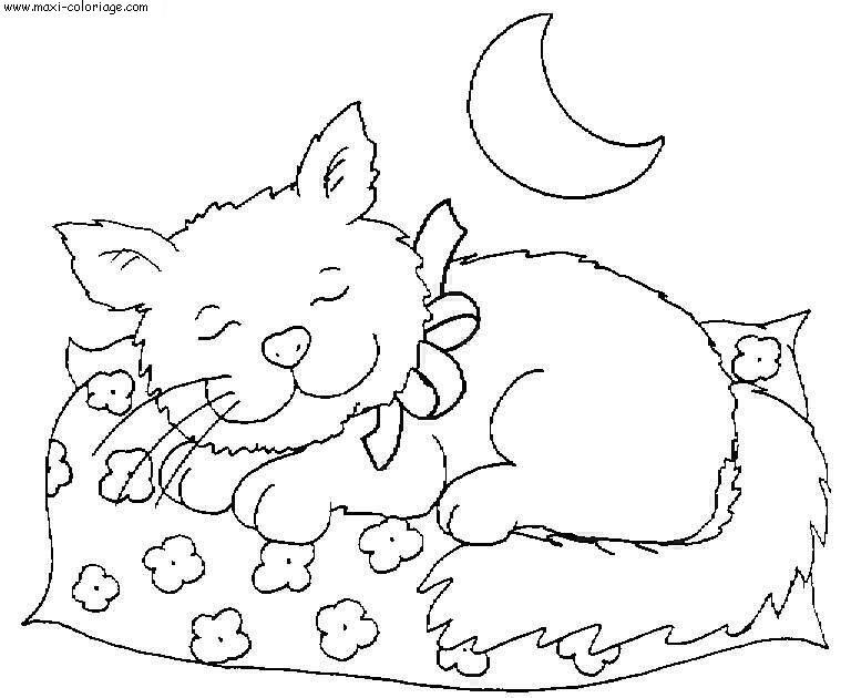 Dessin chaton dort - Maxi coloriage ...