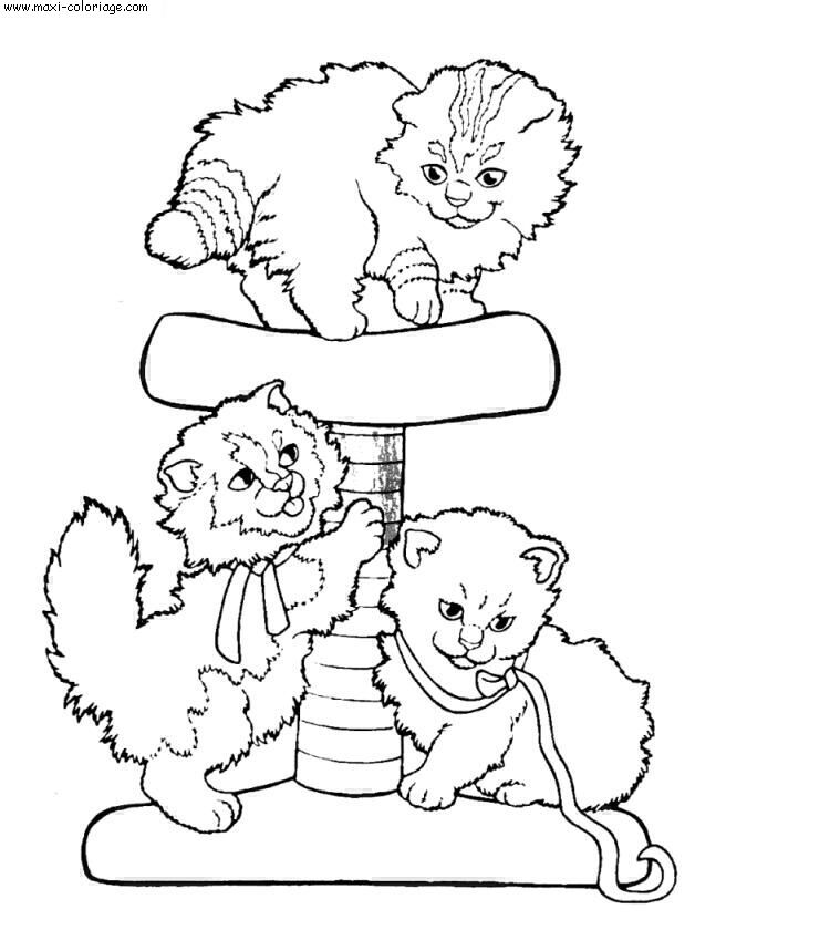 Le blog de tigresse animaux chats chiens chevaux - Maxi coloriage ...