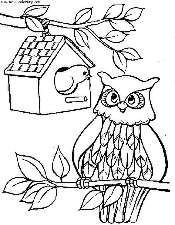 coloriage Chouettes