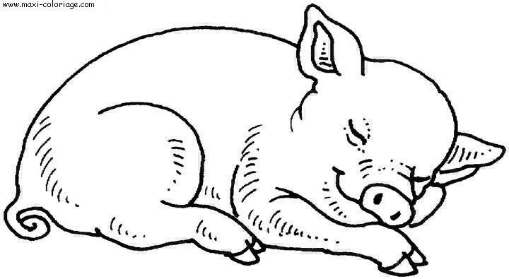 Dessinde cochon - Dessin cochon debout ...