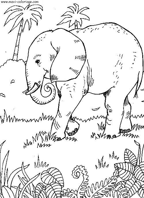 Coloriage elephant - Maxi coloriage ...