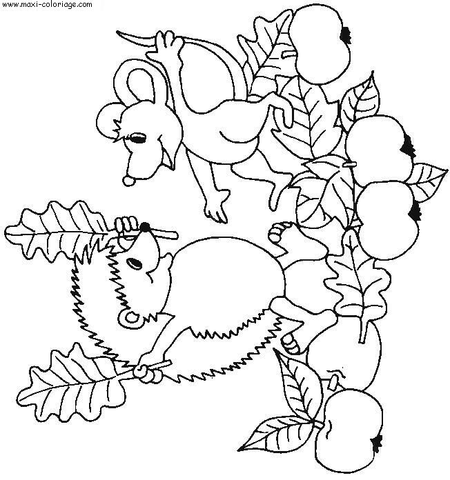 Coloriage herissons dessin herissons herissons coloriage n 4364 - Maxi coloriage ...