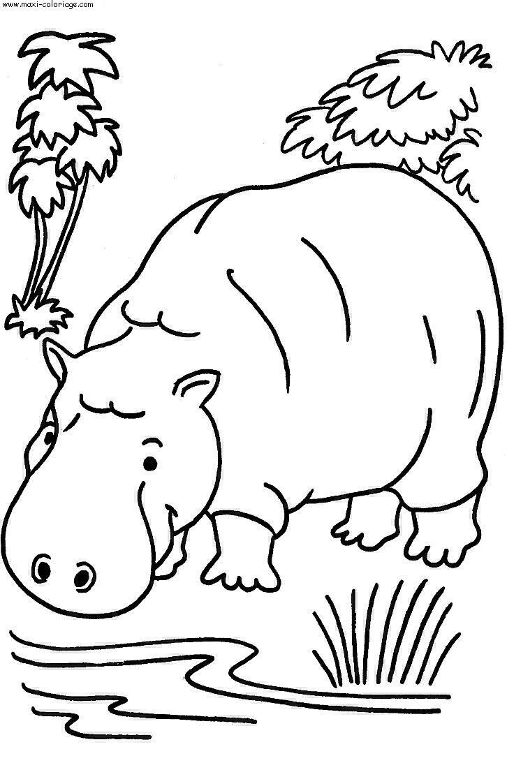 Hippopotame dessin - Maxi coloriage ...