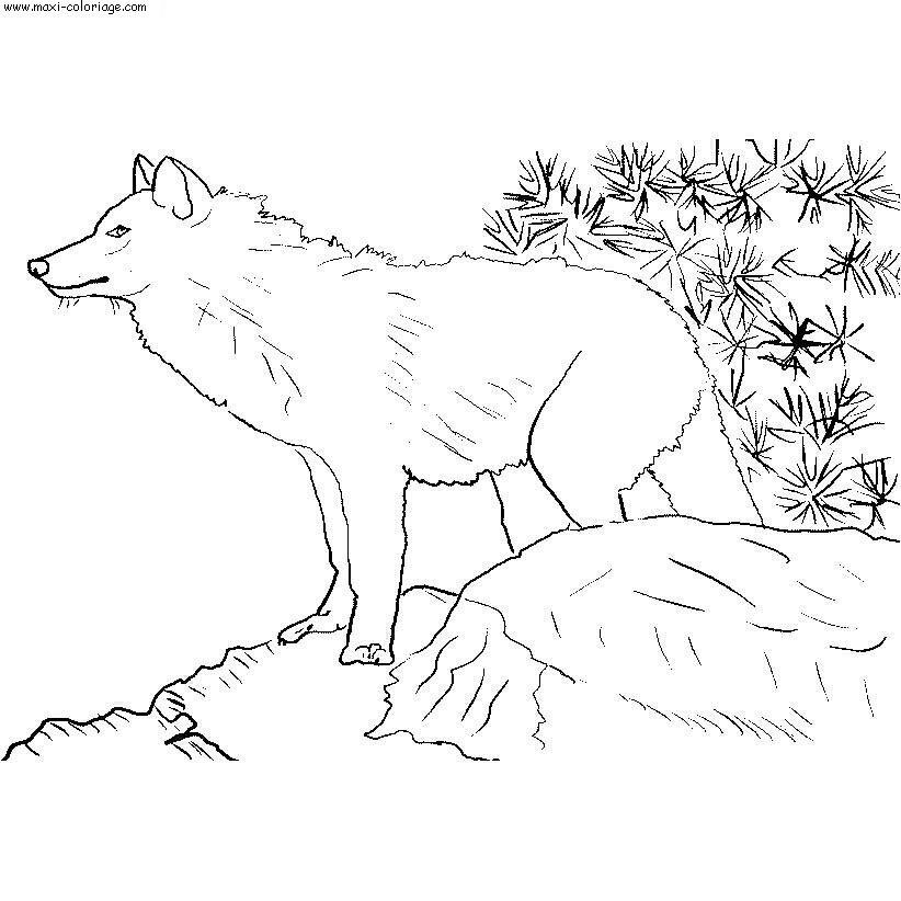 Dessin chien loup - Maxi coloriage ...