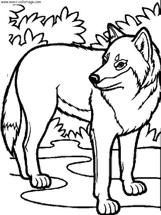 Loups - Maxi coloriage ...