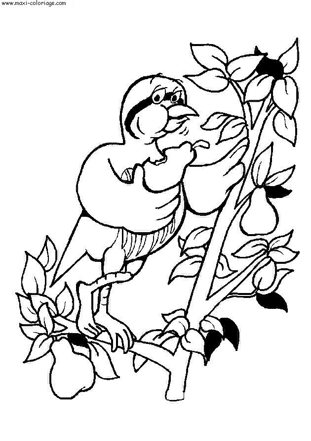 Coloriage oiseaux a imprimer gratuit - Maxi coloriage ...