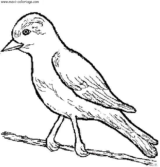 Dessiner un oiseau - Maxi coloriage ...