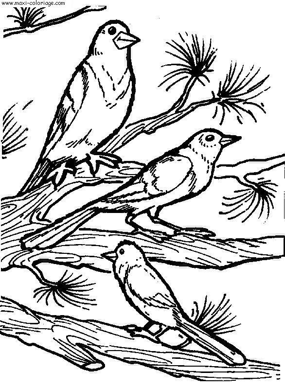 coloriage Oiseaux