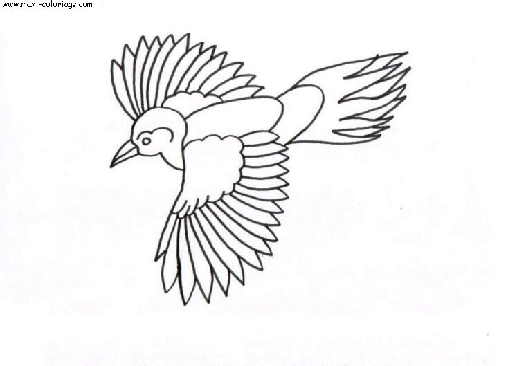 coloriage oiseaux, dessin oiseaux, oiseaux Coloriage N°4494