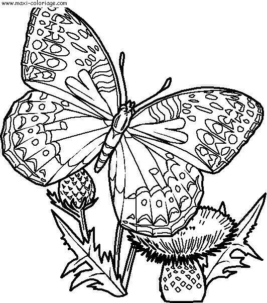 carte invitation Papillons