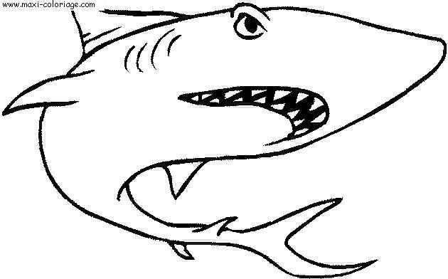 Dessin du requin - Dessiner un requin blanc ...