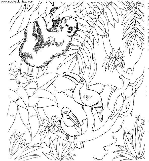 Coloriage Zoo Dessin Zoo Zoo Coloriage N 5802