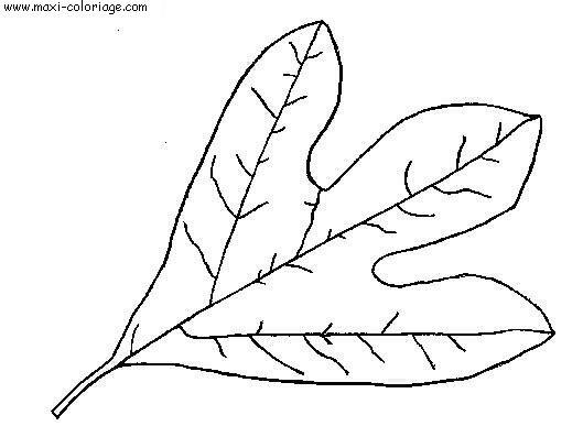 Coloriage feuilles dessin feuilles feuilles coloriage n 5357 - Maxi coloriage ...