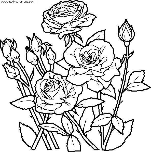 Dessin de fleurs imprimer - Maxi coloriage ...