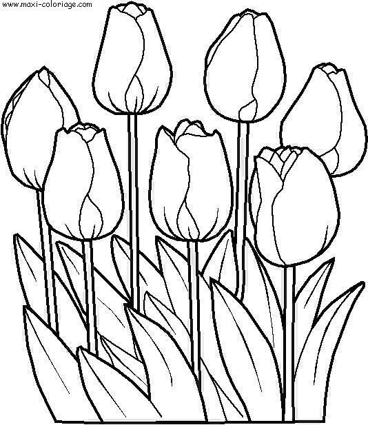 Coloriage Fleur Coucou.Fleurs Dessin